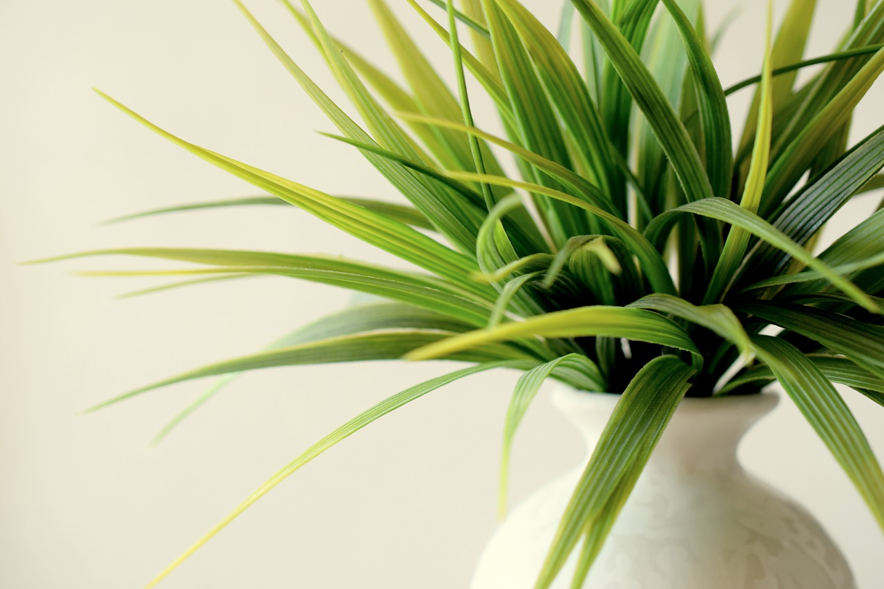 plant-828714_1280
