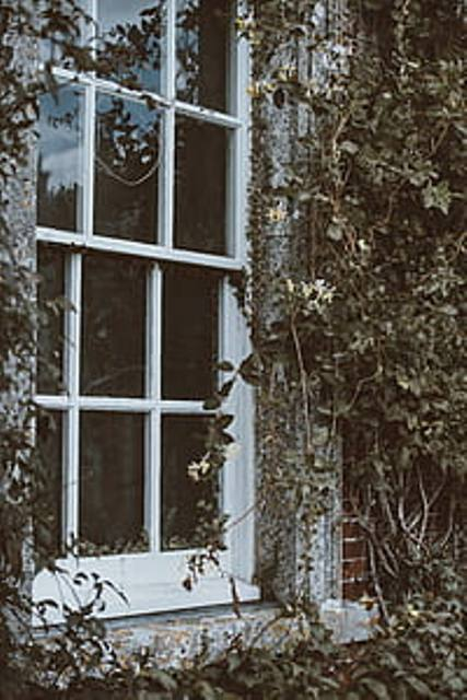 window-ivy-building-glass-thumb