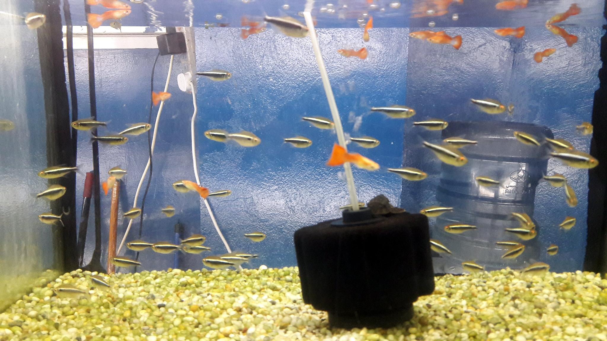 Freshwater_Aquarium1