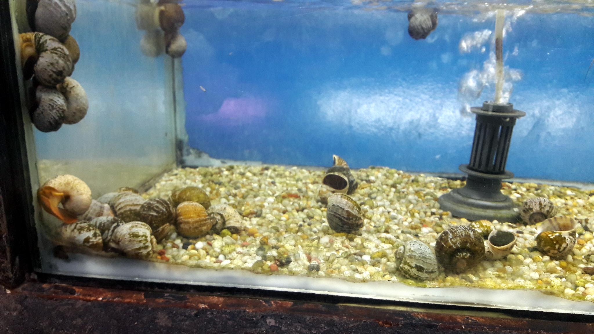 Freshwater_Aquarium2