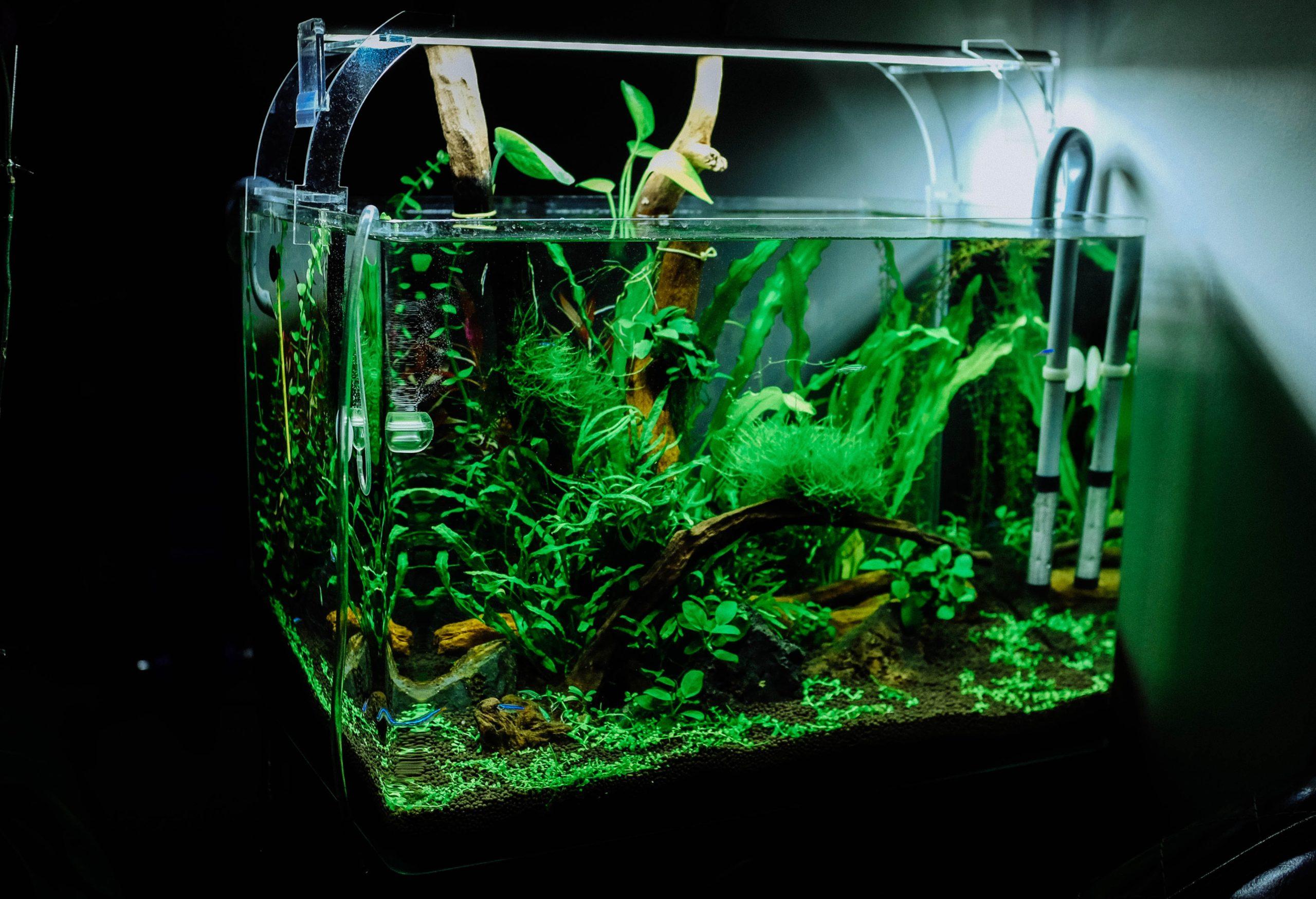 Freshwater_Aquarium3